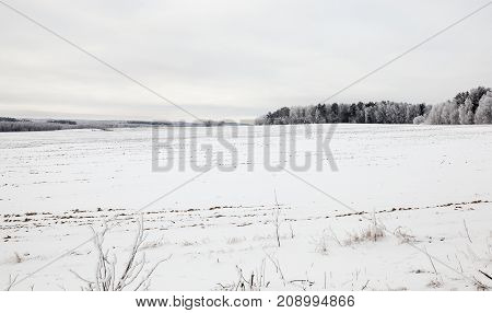 Winter landscape with a snow-covered field and trees in the frost. cloudy winter day with a gray sky