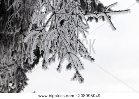 trees covered with hoarfrost of white color. photo in the winter season during cloudy weather.