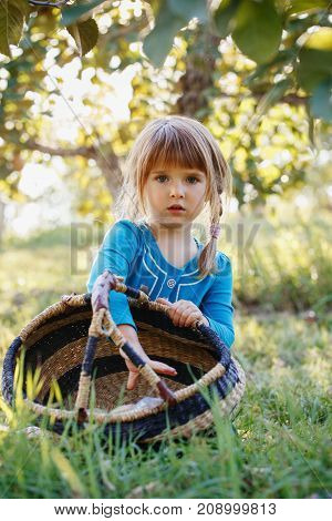 Closeup portrait of cute adorable little red-haired Caucasian girl child with blue eyes picking apples in garden on farm outside. Happy childhood concept