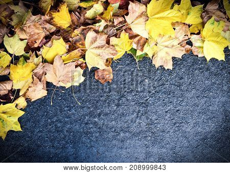 Autumn Image - Study of Fallen Leaves Scattered on a Pathway