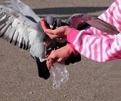 A girl hands feeding pigeons...competition for food...:) poster
