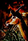 Illustration of Impala Head in Felt Fire Setting poster