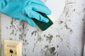 Housekeeper's Hand With Glove Cleaning Mold From Wall With Sponge And Spray Bottle poster