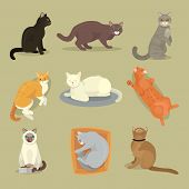 Different cat breeds cute kitty pet cartoon cute animal character set illustration. Mammal human friend cat breed animals icons. Cat s paws. Catlike movement and feline manner. poster
