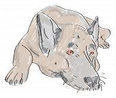 Illustration of lying wolf-dog - hand drawn poster