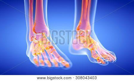 3d rendered illustration of the human, skeletal feet