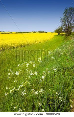 Colourful Rural Landscape
