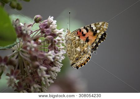 Butterfly On Flower View. Macro View Butterfly Flower. Butterfly Macro View. Flower Butterfly Closeu