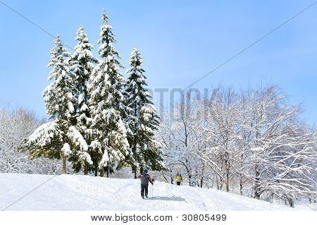 Snow-covered Forest , Blue Sky And Skiers