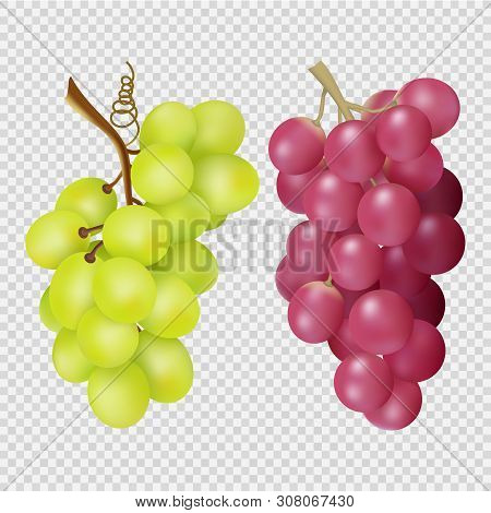 Realistic Grapes Isolated On Transparent Background. Vector Bunches Of Red And White Grapes. Illustr