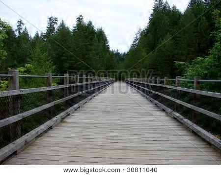 Bridge into the Forest
