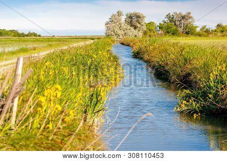 National park Camargue, Provence, France