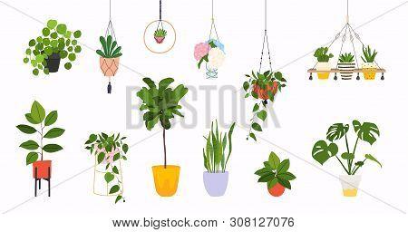 Set Of Macrame Hangers For Plants Growing In Pots. Flowerpot Isolated Objects, Houseplant Flower Pot