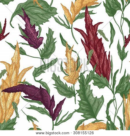Elegant Botanical Seamless Pattern With Quinoa Plants On White Background. Backdrop With Staple Food