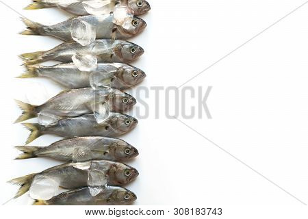 Fesh Bluefish With Ice Cube On White. Fish Pattern. View From Above.