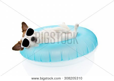Puppy Dog Summer Vacations. Jack Russell Dog Sunbathing With Blue Air Float Pool On Holidays. Isolat