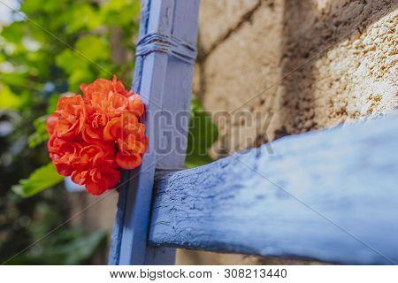 Close Up Of Red Geranium Flower In A Blue Ladder