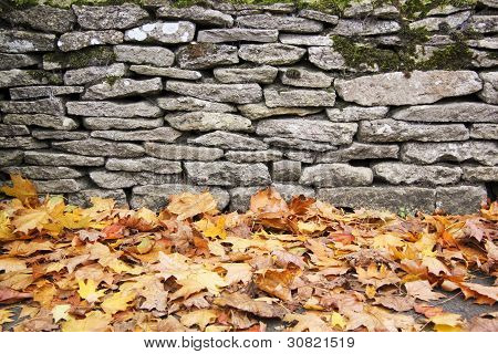Dry Stone Wall Autumn Leaves