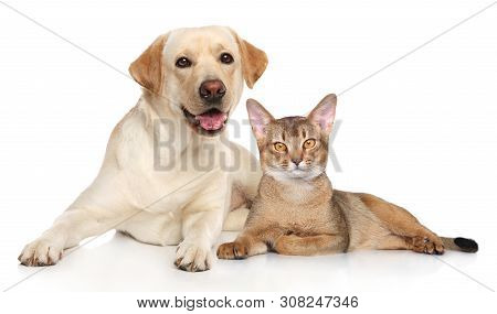 Cat And Dog Together Resting On White Background