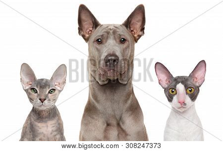 Close-up Of A Cats And Dog Together, Isolated On White. Animal Themes