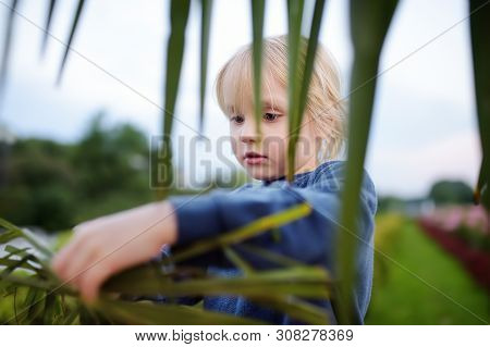 Little Boy Exploring Palm Tree. Child First Time Sees Palm Tree. Activity For Inquisitive Child. Tra