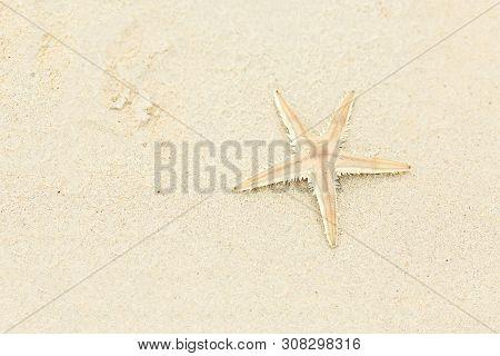 Beautiful Beige Starfish On The Sand, Travel Concept On Tropical Starfish Beach. Copy Space. Gorizon