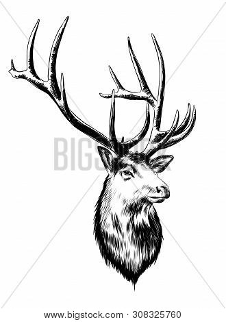 Vector Engraved Style Illustration For Posters, Decoration And Print. Hand Drawn Sketch Of Deer In B