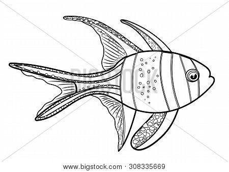Banggai Cardinal Fish, Line Silhouette Cartoon Hand Drawn Sea Animal, Contour Maritime Character, Co