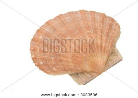 Clam Shell