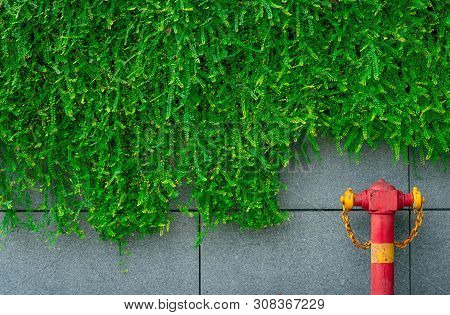 Fire Safety Pump On Texture Background Of Green Leaves Of Ivy Hanging On Gray Concrete Wall In The C