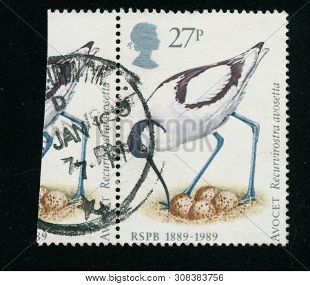 Vintage Stamp Printed In Great Britain 1989 Shows The 100Th Anniversary Of Rspb - Birds