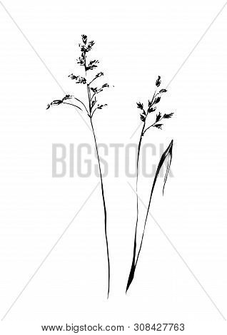 Set Of Hand Drawn Weed Field Herbs. Outline Plants Painting By Ink. Sketch Or Doodle Style Vector Il