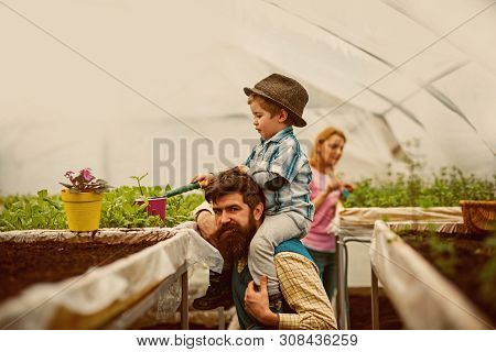 Greenhouse Hobby. Greenhouse Hobby Of Happy Family. People Have Hobby In Greenhouse. Greenhouse Hobb