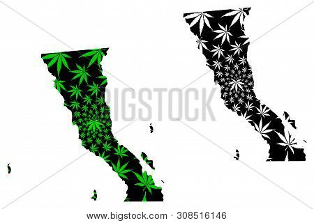 Baja California (united Mexican States) Map Is Designed Cannabis Leaf Green And Black, Free And Sove