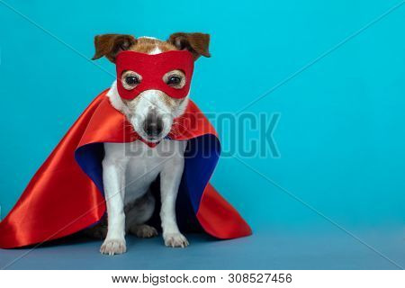 Dog Super Hero Costume. Little Jack Russell Wearing A Red Mask For Carnival Party Isolated Blue Back