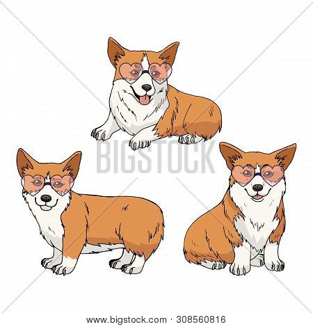 Set Of Three Cute Pembroke Welsh Corgi Wearing Pink Heart Glasses Isolated On White Background. Vect