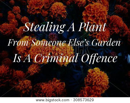 Image With Wordings Or Quotes - Stealing A Plant From Someone Else's Garden Is A Criminal Offence