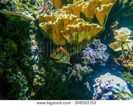 Underwater Landscape With Coral Reef And Fish. The Aquarium Inhabitants Of The Underwater World In T