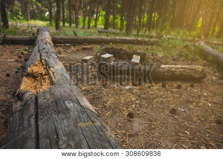 Halt Place With A Fire In A Coniferous Forest