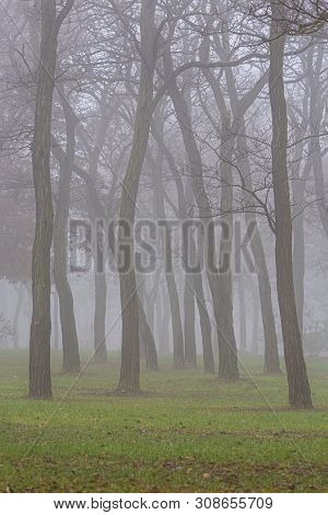 Autumn Day In The Park, In A City, With Fog And Mist, And Locust Tree Silhouettes