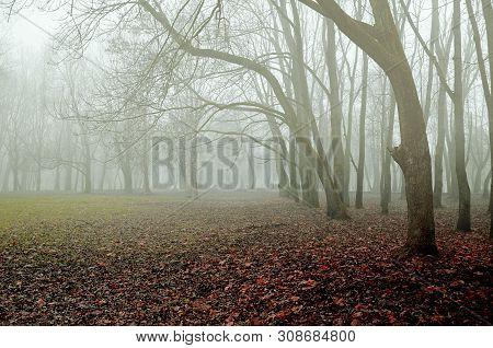 Autumn November landscape. Foggy autumn park with falling dry autumn leaves. The autumn season, colorful autumn landscape foggy scene