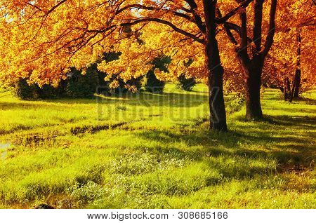 Fall sunny forest landscape. Fall trees with yellowed foliage in sunny October forest lit by sunshine. Colorful fall landscape in colorful tones