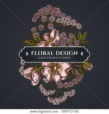 Floral Bouquet Dark Design With Dog Rose, Valerian, Angelica Stock Illustration
