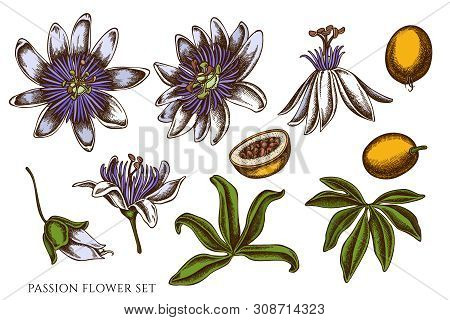 Vector Set Of Hand Drawn Colored Passion Flower Stock Illustration