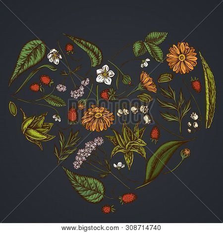 Heart Floral Design On Dark Background With Aloe, Calendula, Lily Of The Valley, Nettle, Strawberry,