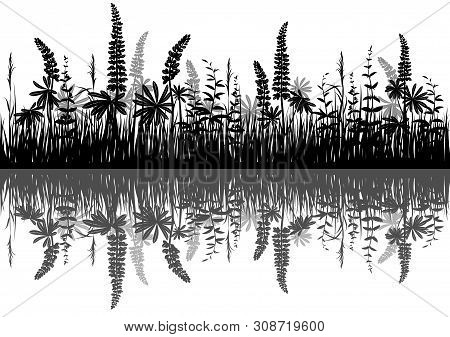 Line Seamless Landscape With Black Silhouette Grass And Lupine, Reflecting In Water, Isolated On Whi
