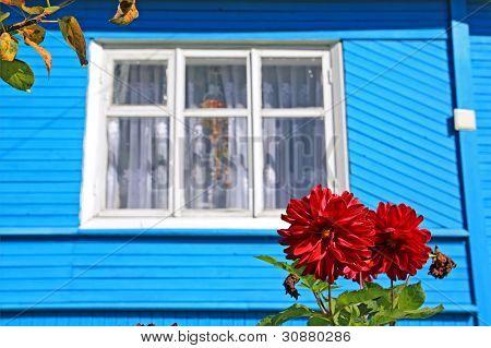 red flowerses against wooden rural building