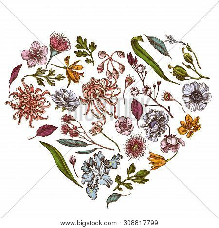 Heart Floral Design With Colored Japanese Chrysanthemum, Blackberry Lily, Eucalyptus Flower, Anemone