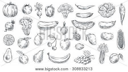 Sketched Vegetables And Fruits. Hand Drawn Organic Food, Engraving Vegetable And Fruit Sketch. Healt