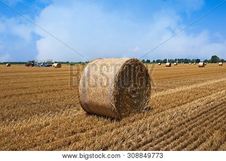 Agricultural Scene, Tractor Loads The Bales Of Hay On The Trailer.